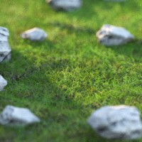 Short Trodden Grass Material